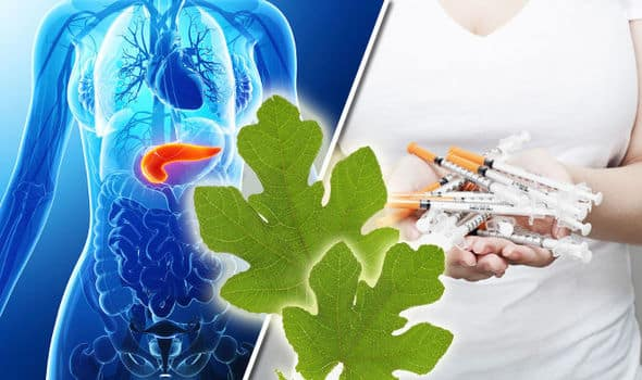 Would you Adam and Eve it? Natural treatment for DIABETES growing in your garden