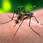 Bengaluru residents find solution for dengue in homeopathy